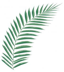 leaf palm