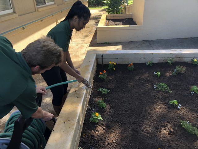 nursing students planting a garden